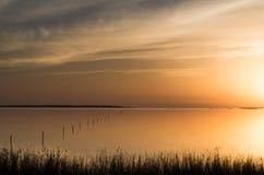 在盐水湖的日落有通过芦苇和仓促被看见的太阳的 免版税库存照片