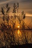 在盐水湖的日落有通过芦苇和仓促被看见的太阳的 免版税库存图片
