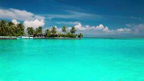在盐水湖的棕榈树有白色海滩的在马尔代夫 影视素材