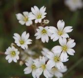 在盐水湖的野花 图库摄影