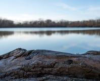 在盐水湖附近的日志在白天期间 库存图片