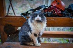 在盔甲和绳索的背景的猫 免版税图库摄影