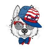 在盖帽、玻璃和领带的一条美丽的狗 导航明信片或海报的,在衣裳的印刷品例证 纯血统小狗 多壳 免版税库存图片