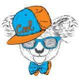 在盖帽和领带的逗人喜爱的考拉 考拉传染媒介 熊看板卡eps10问候向量 澳洲 美国,美国 考拉佩带的玻璃 图库摄影