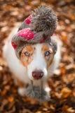 在盖帽的狗在下落的叶子 库存照片