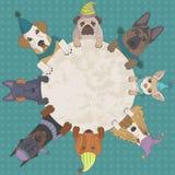 在盖帽的狗 免版税图库摄影