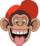 在盖帽的猴子头 库存照片