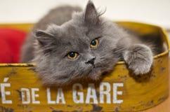在盘子的一只逗人喜爱的小的小猫 免版税库存照片