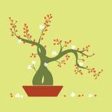 在盘子的开花的盆景树 免版税库存照片