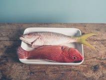 在盘子的异乎寻常的鱼 免版税库存照片