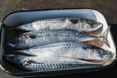 在盘子的整个鲭鱼鱼 库存照片