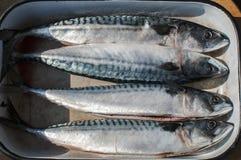 在盘子的整个鲭鱼鱼 免版税图库摄影
