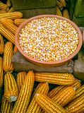 在盘子的玉米 免版税库存照片