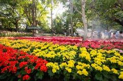 在盛大开幕式第12个清莱花节日的郁金香领域 库存图片