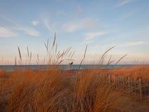 在盛大弯安大略加拿大的休伦湖海滩在冬天 免版税库存照片