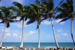 在盛大riviere的棕榈树在马提尼克岛 库存照片
