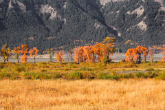 在盛大Tetons的秋天颜色 免版税库存照片
