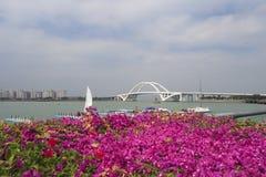 在盛开的九重葛在wuyuan海湾 免版税库存照片