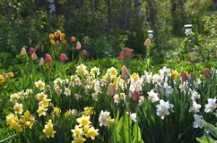 在盛开的春天花! 库存照片