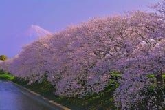 在盛开的樱花在` Ryuuganbuchi ` Urui河的早晨 免版税图库摄影