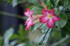 在盛开的花在雨中 免版税库存图片