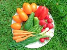 在盛肉盘的新鲜的成熟蔬菜 库存照片