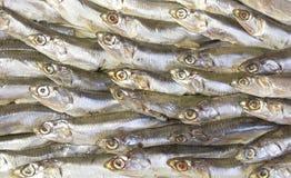 在盛肉盘的鲥鱼咸鱼 库存照片