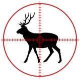 在目标的一头鹿 库存图片