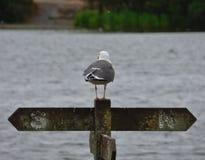 在看在pennington一刹那国家公园,照片的篱芭岗位的海鸥拍在英国中间夏天 免版税库存图片