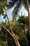 在看天空的密林 免版税库存图片