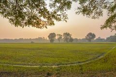 在看我的玉米田的树荫下在早晨 免版税库存图片