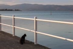在看水的码头的一只猫 免版税库存照片
