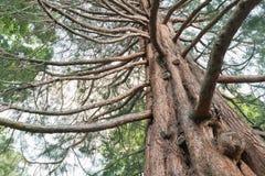 在看法下的橡树反对天空 免版税库存图片