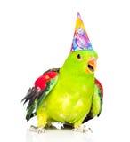 在看照相机的生日帽子的鹦鹉 查出在白色 图库摄影