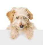在看照相机的白色横幅上的狗。 免版税库存照片
