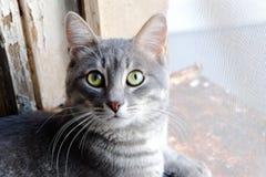 在看照相机的窗口基石的汤姆猫 免版税库存图片