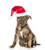 在看照相机的红色圣诞节帽子的混杂的品种小狗 查出在白色 库存图片