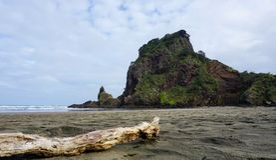 在看狮子岩石的Piha海滩的漂流木头 免版税图库摄影