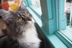 在看的好奇猫上面 免版税库存图片