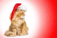 在看边的圣诞老人盖帽的大姜猫 免版税库存图片
