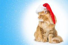 在看边的圣诞老人盖帽的大姜猫 免版税库存照片