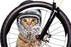 在看通过自行车车轮的自行车盔甲的猫 库存图片