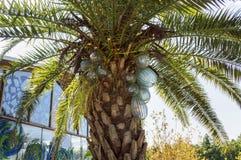 在真正的棕榈树的玻璃椰子在济州玻璃博物馆 图库摄影