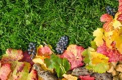 在真正的草绿色背景的秋天构成  库存图片