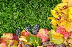 在真正的草绿色背景的秋天构成  免版税库存图片