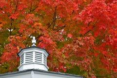 在眺望台屋顶上的槭树 库存图片