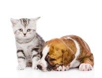 在睡觉小狗附近的小猫 背景查出的白色 库存图片