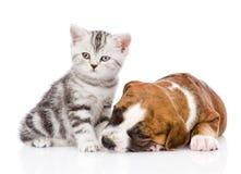 在睡觉小狗附近的苏格兰小猫 背景查出的白色 库存照片