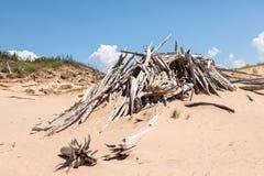 在睡觉的熊沙丘国民的漂流木头小屋湖岸在Emp附近 库存图片