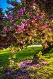 在督伊德教憎侣小山的五颜六色的树停放,巴尔的摩,马里兰 免版税库存照片